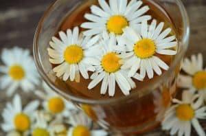 玻璃杯里的洋甘菊花