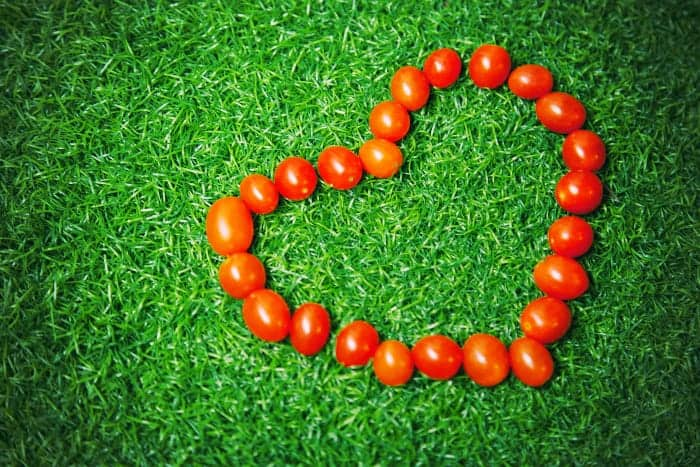 番茄在草地上排列成一个心形。